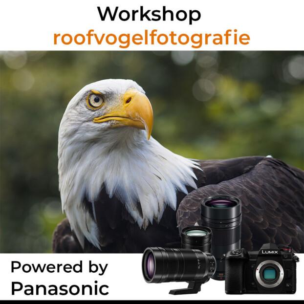 Workshop Roofvogelfotografie powered by Panasonic